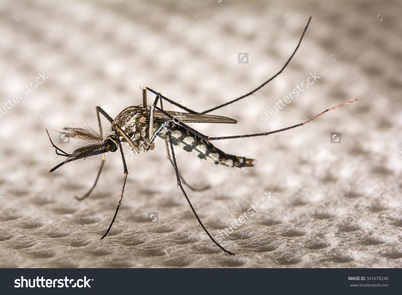 Muggen-bestrijden